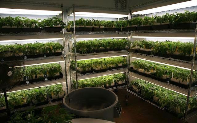 marijuana cultivation business plan