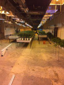 Borrough's Rivet Span Shelving, Western Storage and Handling, Western Storage, Cannabis Grow Facility, Rivet Span Shelving,